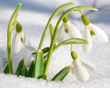 Préparer le printemps !